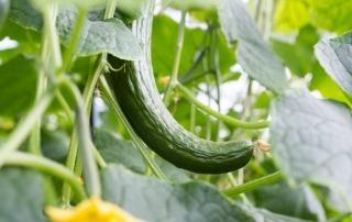Onderzoek Radar over kromme groente en fruit